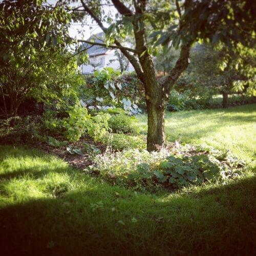 Zahrada v Trojanovicích